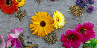 flowers and seeds
